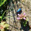 niebieski labradoryt naszyjnik